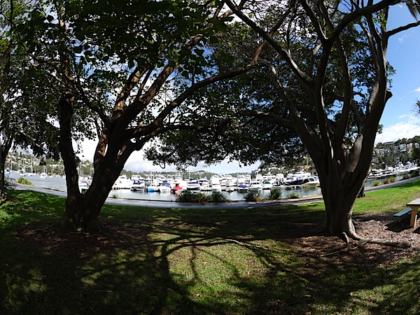 Tree and boats 8mm.JPG