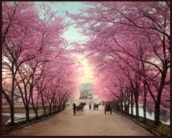Image by Okinawa Soba