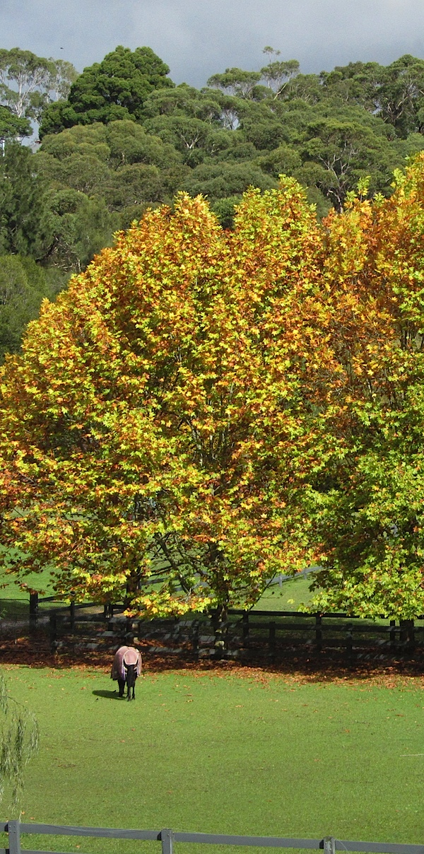 Autumn trees sun 1.JPG