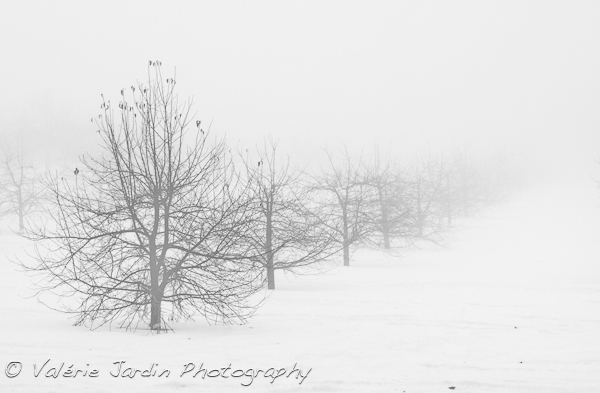 Image: Unusual weather conditions, such as snow and fog, can create some interesting images. Don...
