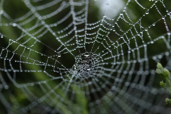 How to Photograph a Spider's Web