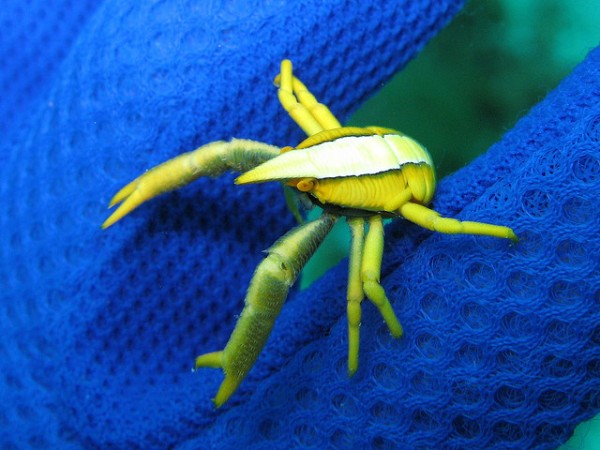 Image: Crab sitting on a net - Copyright Tanaka Juuyoh