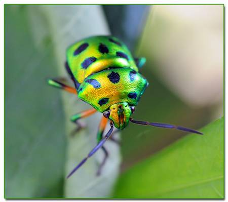 Image: Macro Bug by Murlon123