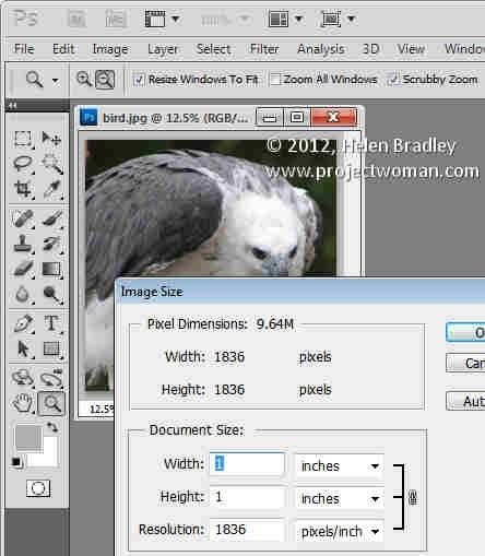 Photoshop_crop_image_to_fixed_ratio_4.jpg