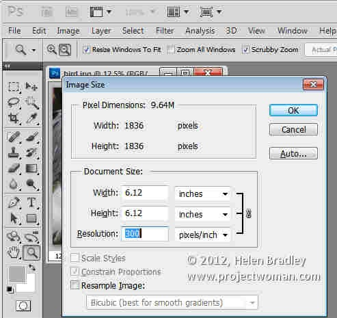 Photoshop_crop_image_to_fixed_ratio_5.jpg