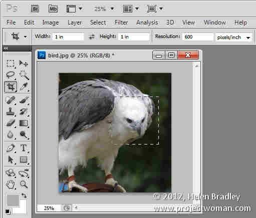 Photoshop_crop_image_to_fixed_ratio_6.jpg