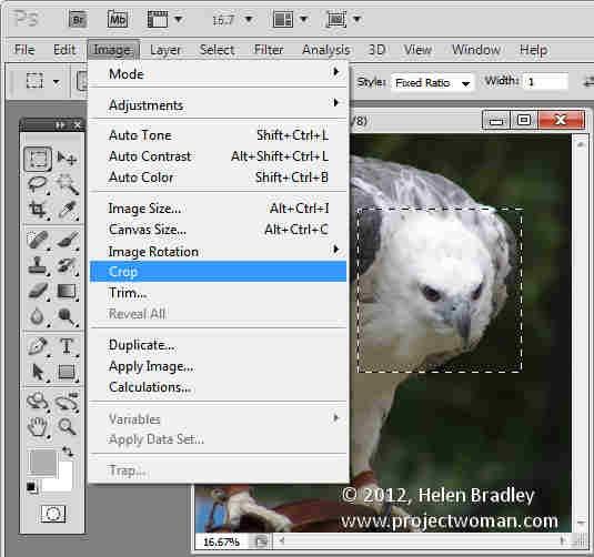 Photoshop_crop_image_to_fixed_ratio_8.jpg