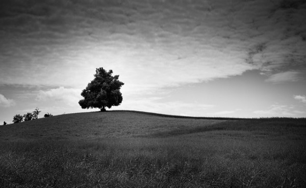 the tree yet again - 27 Black And White Landscape Images