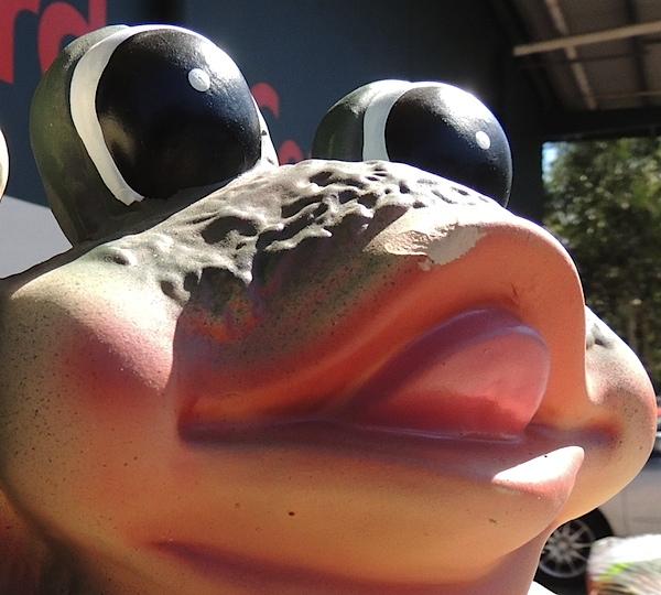 Bunnings frog.JPG