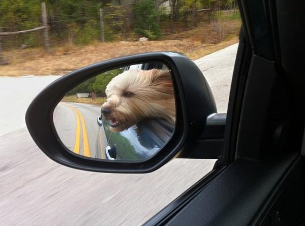 Through an open window my fur blows....