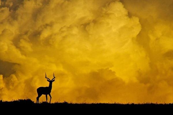 Image result for kenya photography