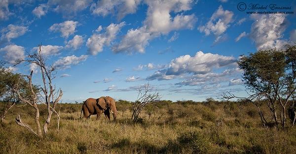 Elephant_Scape.jpg