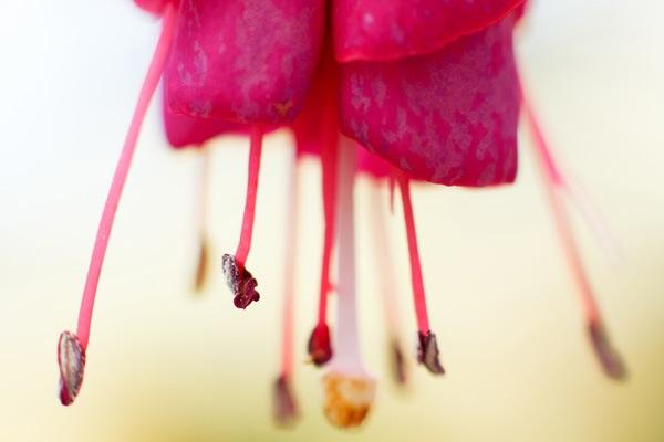 close-up-photography-5.jpg