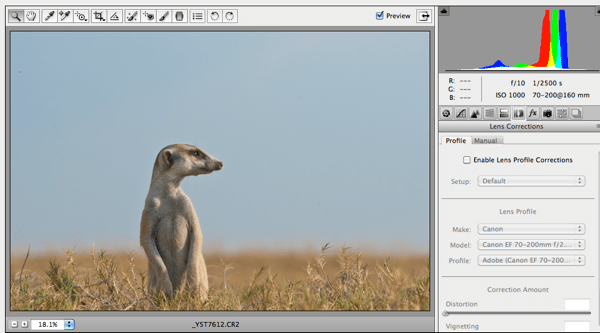 Post Processing Meerkat Photo with Anette Mossbacher
