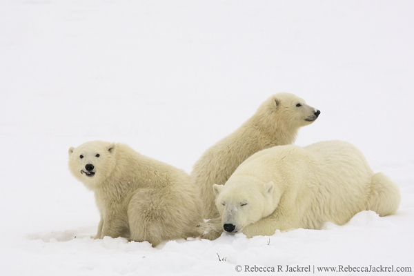 Focus On Rebecca Jackrel ~ For The Love Of Wildlife
