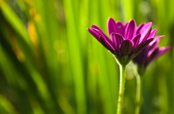 Depth of Field in Floral Photography