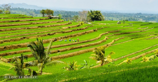 Travel Inspiration: Bali