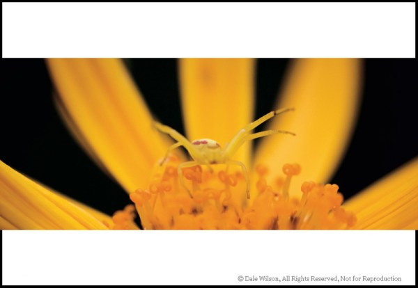 Image: A backyard garden is a prefect training ground for the nature photographer. Get down low and...