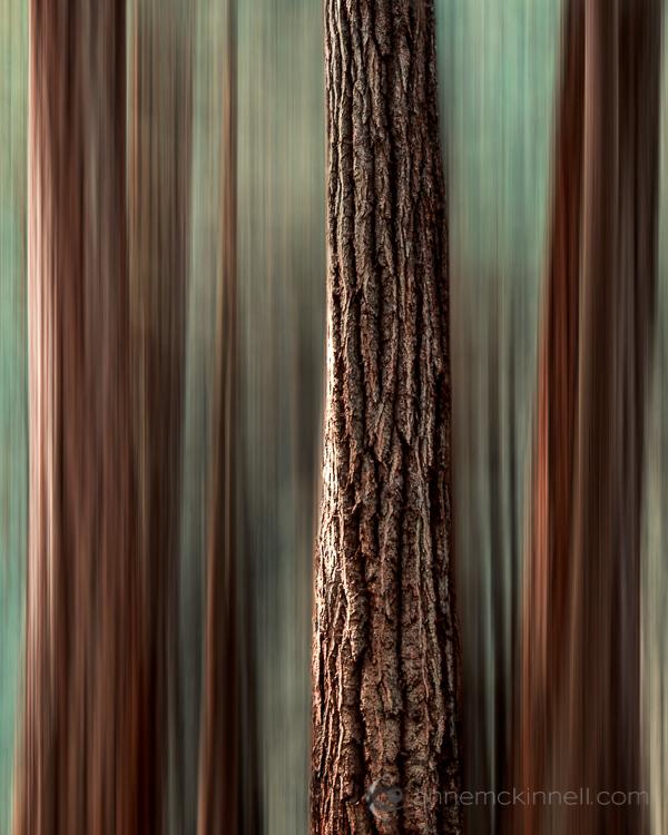 Motion Blur Revealed