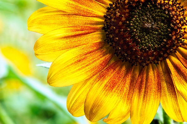 Denver Botanic Gardens-36(sRGB-websize)