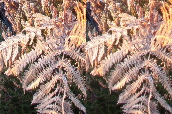 Corte de 100% de imagens f / 8 ef / 16, para ilustrar a distância hiperfocal para paisagens nítidas
