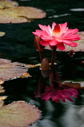Botanical Gardens_091209_0103(sRGB-websize)