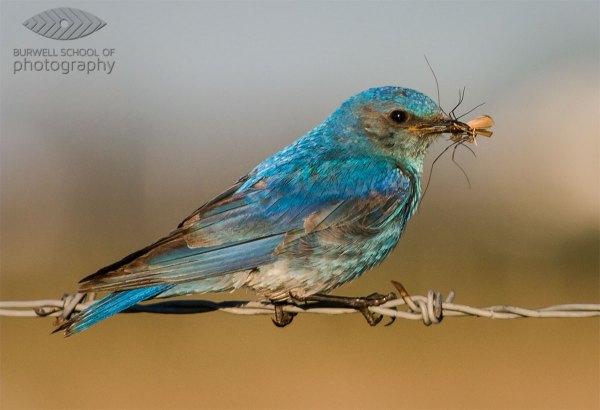 Making Sharper Wildlife Photographs – [Part 1 of 2]