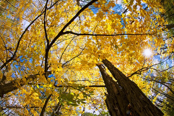 This shot of the canopy of autumn leaves in upstate NY was taken with a fisheye lens. The sun shining through the gap in the leaves added just the touch of drama I needed. EOS-1D X, EF 8-15mm f/4L.  1/60, f/16, ISO 100.