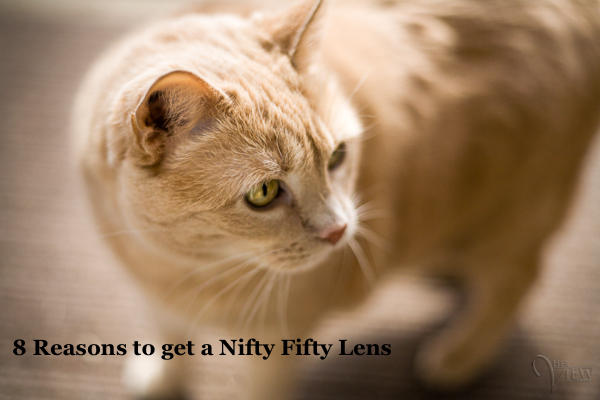 nifty-fifty-featured