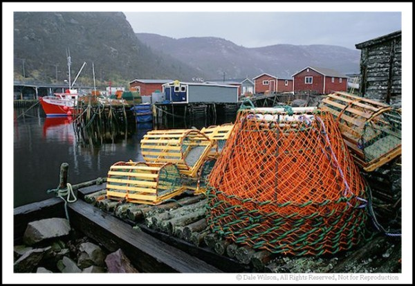 The quintessential hishing village of Petty Harbour. Just park your car and have fun walking around the small harbour.