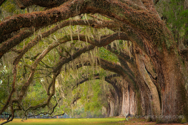 Boone Hall Planation in Charleston, South Carolina by Anne McKinnell