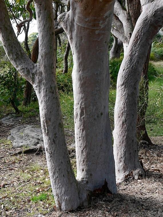 树木2.JPG