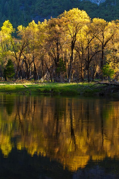 """I wanted to capture this image of trees reflected in the Merced, but the water was undulating just enough to cause problems with the reflection. A slower shutter speed helped smooth the ripples and give me a better reflection. EOS 5D Mark III, EF 70-300 f/4-5.6L, ISO 100, f/16, .3""""."""