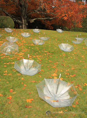 Fall Umbrellas by Anne McKinnell