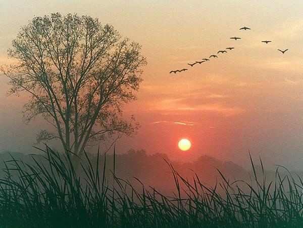 Autumn dawn photo - flock of birds