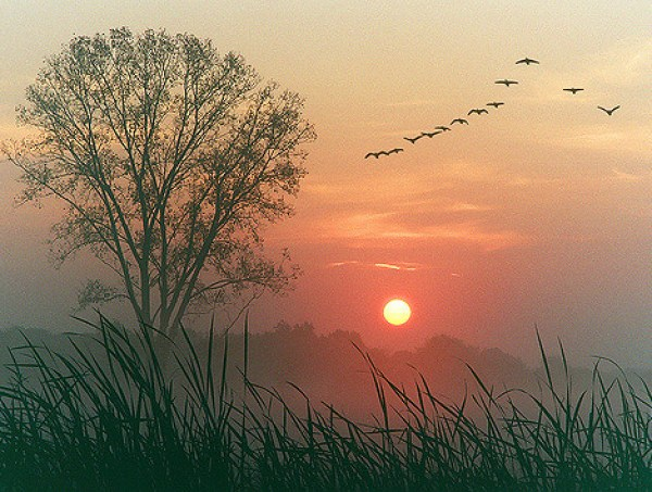 Autumn dawn photo - flock of birds