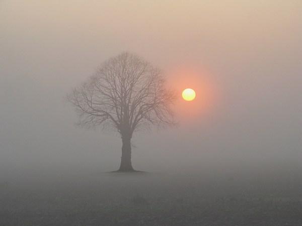 Sunrise with Tree