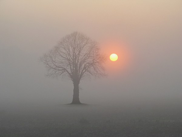 Sunrise with Tree