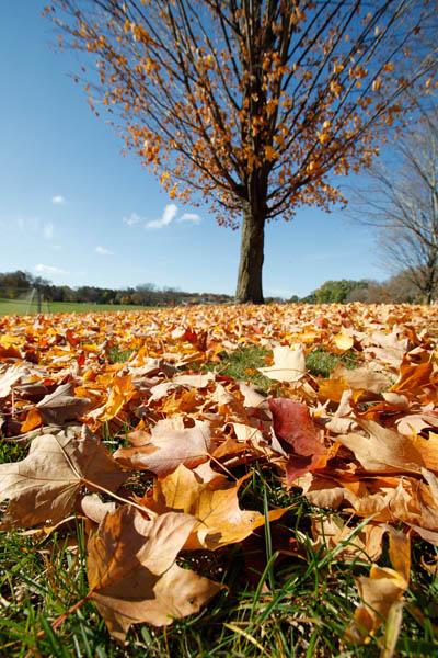 McEnaney wide angle leaves
