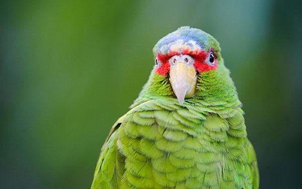 5 Tips to Take Better Images in a Zoo