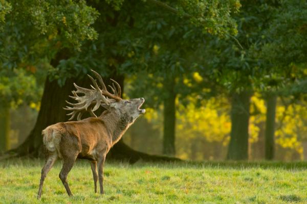 side lighting wildlife photography