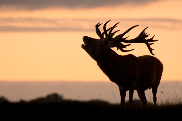 silhouette wildlife photography