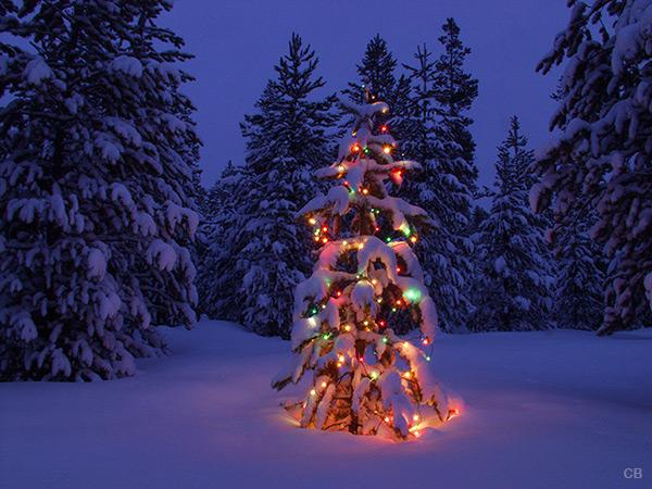 Winter wonderland holiday photo tree 14a