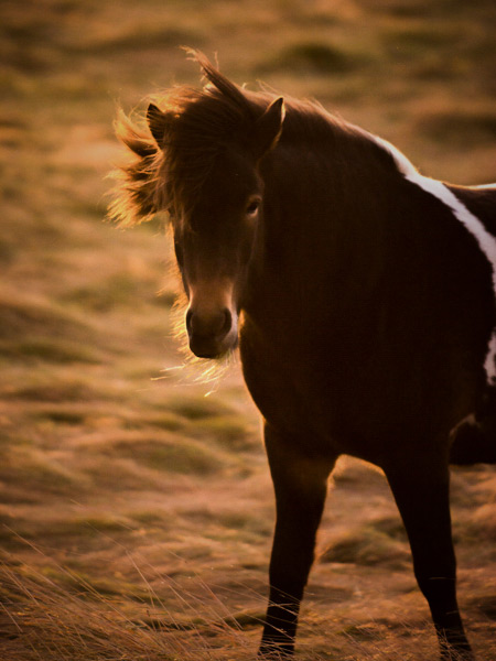 back-light-wildlife-photography-1-edit