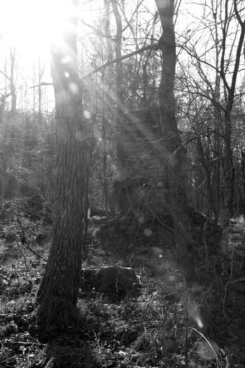 McEnaney-flare-bw-woods