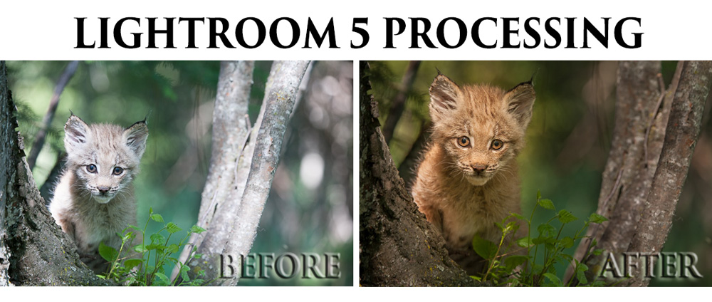 Processing an Image in Lightroom 5 - a Video Tutorial