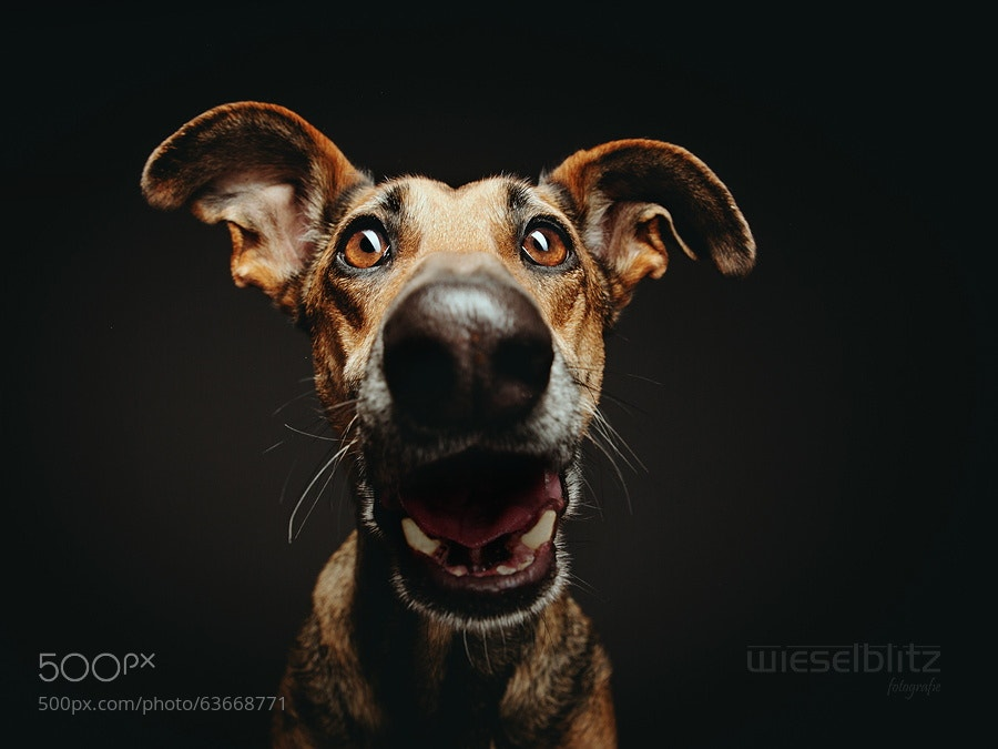 Photograph Suspense... by Elke Vogelsang on 500px