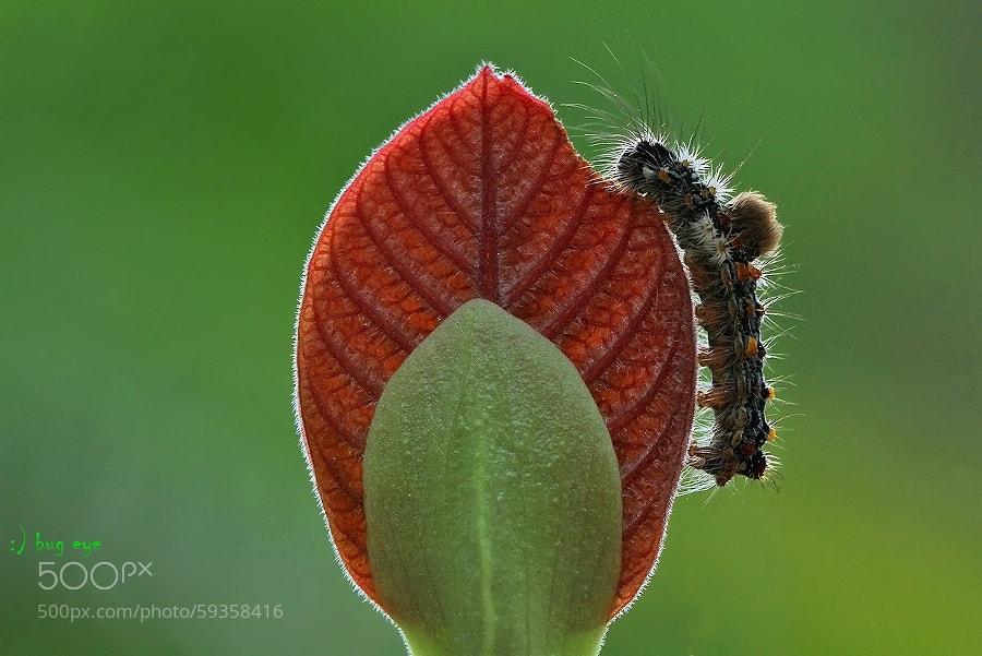 Photograph yummy :P by bug eye :) on 500px