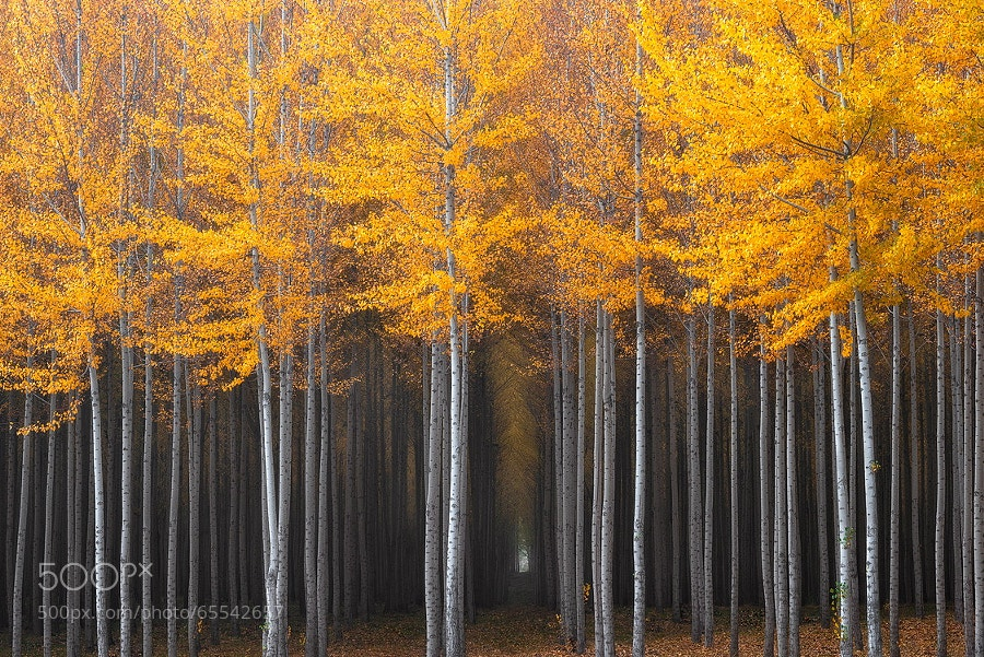 Photograph Mysterious Hallway by David Thompson on 500px