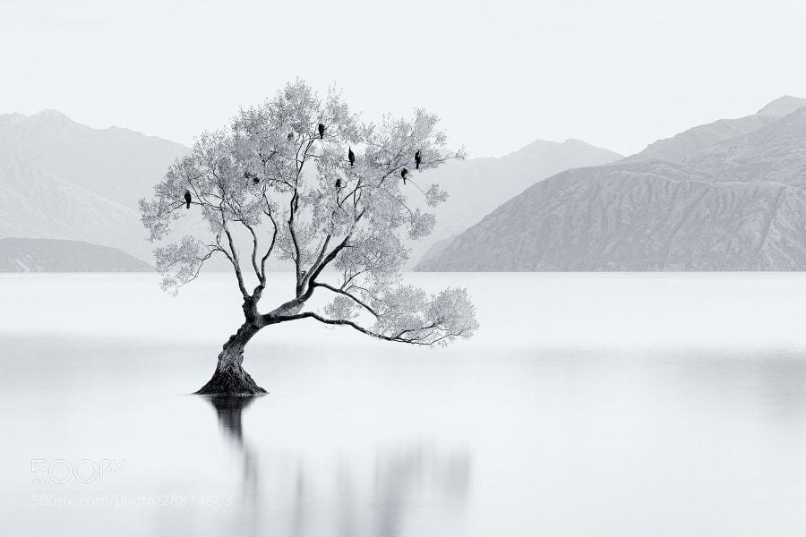 Photograph Bird Tree by Jordan Ek on 500px